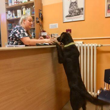 Stres z veteriny? To není Brighdee případ😊